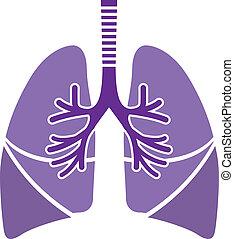 saudável, pulmões
