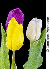 Fresh spring flowers in a vase