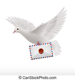Dove white - White pigeon fly with letter in beak