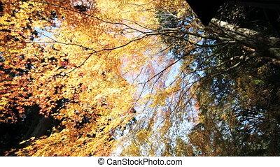 fall season of kyoto, Japan - Kyoto, Japan - November 26,...