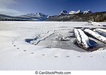 Animal tracks in nature winter lake - Idaho mountain lake...