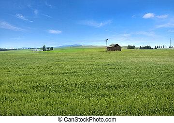 Palouse landscape - Beautiful wheat fields in Palouse,...