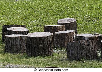 árvore, tronco,