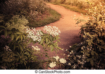 Nature trail and blooming bushes - A nature trail in the...
