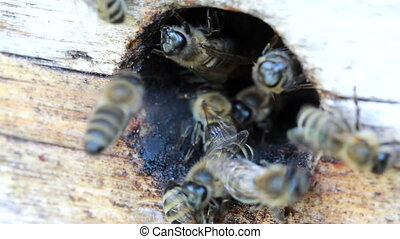 Group of honeybees flying into a vintage beehive