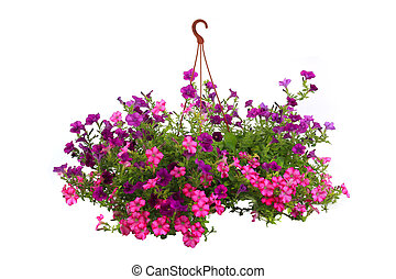 Petunia is a trumpet shaped - Colorful petunias close-up...