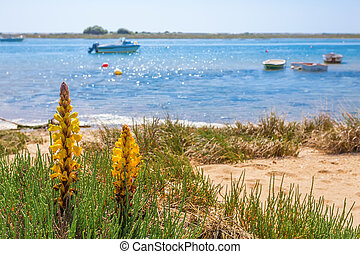 Spring flower on a background of a landscape with boats on the sea. Summer.