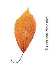 美しい, オレンジ, 秋, 葉, さくらんぼ