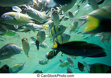 Colorful of fishes with ripples of sunlight reflected on the...