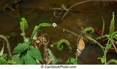 Butterfly sits on a branch near pond. - Butterfly sits on a...