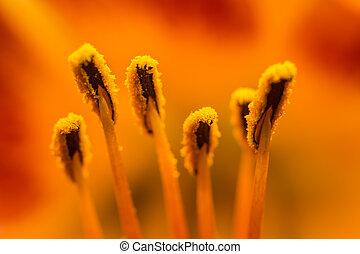 Orange Lilium Pistil Nectar Close Up
