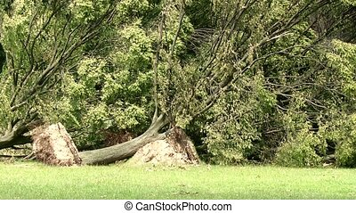 Uprooted Trees after Heavy Storm in Germany, Dusseldorf -...
