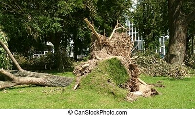 Uprooted Trees after Heavy Storm in Germany, D?sseldorf -...
