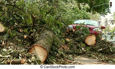 Damaged car because Uprooted Tree - video footage of a...