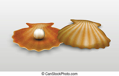 Vector pearl in shell art, background, beach