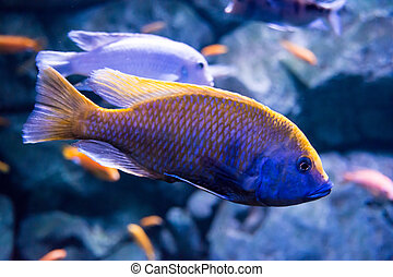 Fish close-up in aquarium