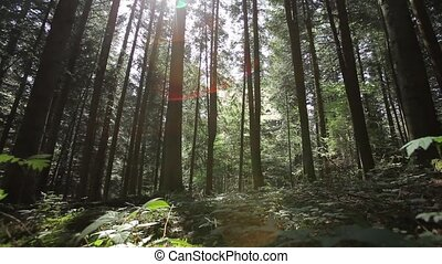 beautiful green forest Dolly shot