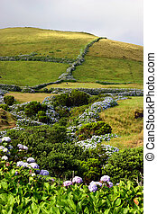 azores typical view at the island of Sao Miguel