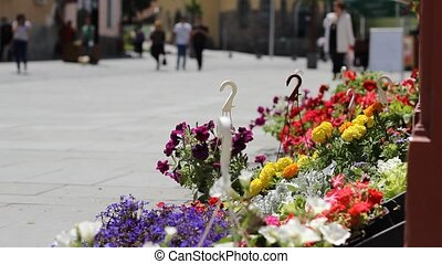 People and Flowers Street View - Blue pansy waving in the...