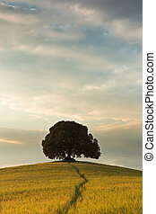 One tree in Tuscany