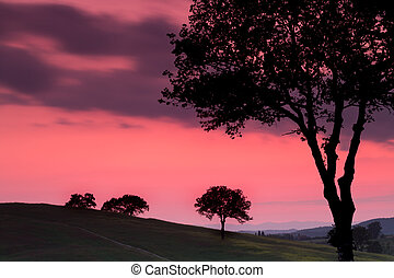 Backlit trees in Tuscany