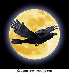 Black raven - Black crow flying on the background of a moon