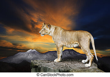 african lioness female standing on rock cliff against...