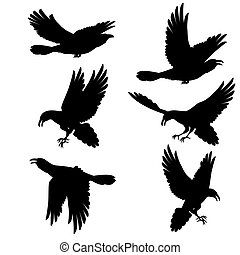 Black ravens - Set Black crows flying on the white...