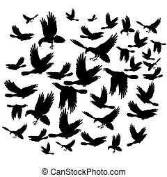 Black ravens - Many black crows flying on the white...