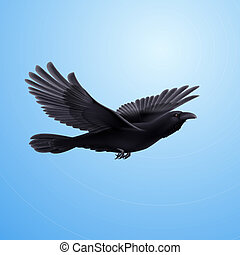 Black raven - Black crow precipitously flying on the blue...