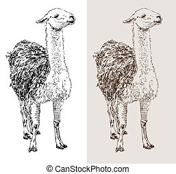 artwork lama, digital sketch of animal, realistic black and...