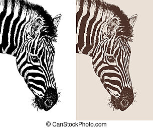 artwork head profile zebra, digital sketch of animal,...