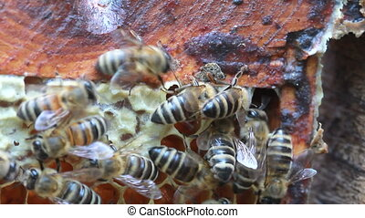 bees inside hive - with some motion blur