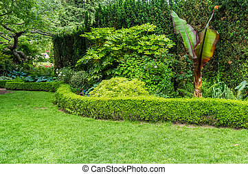 Hedge and planted bed in a garden - Grassy lawn with hedge...