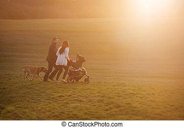 család, babakocsi, természet