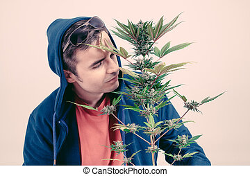 Man smelling Cannabis plant - Man in hoodie smelling...