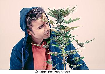 homem, cheirando, cannabis, planta
