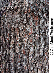 Pine bark - The bark of an old pine