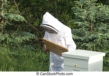 Bee keeper checking a bee hive - A bee keeper checks his...