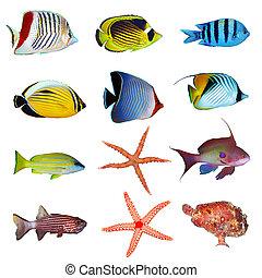 tropical, pez, Colección