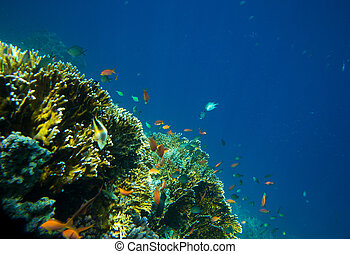 colorful fishes - coral garden full of colorful fishes
