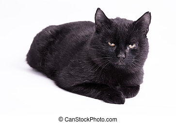 Superstitions. Dirty black cat on isolated background.