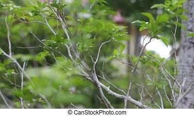 move around tropic green -
