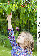 little girl picking a cherry in the garden