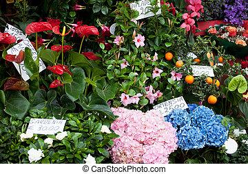 Street show-window of flower shop in Italy,Europa
