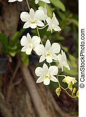 Beautiful white orchid flower in the nature