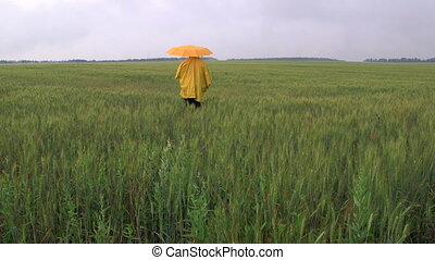 Lonely person under an umbrella walking away through the wheat field
