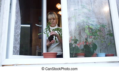 Woman planting a houseplant into clay pot on the windowsill...