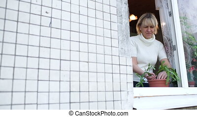 Woman in open window planting a house plant - Panning shot...