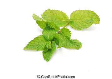 Fresh mint - Fresh green leaves of a organic mint herb plant...